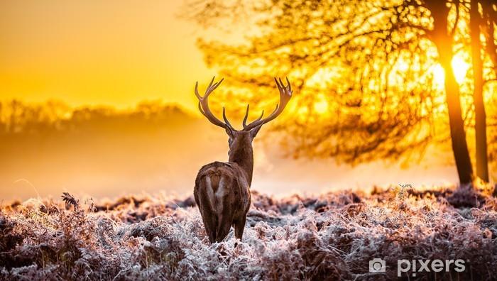Fotomural Estándar Ciervos rojos en el sol de la mañana - Temas
