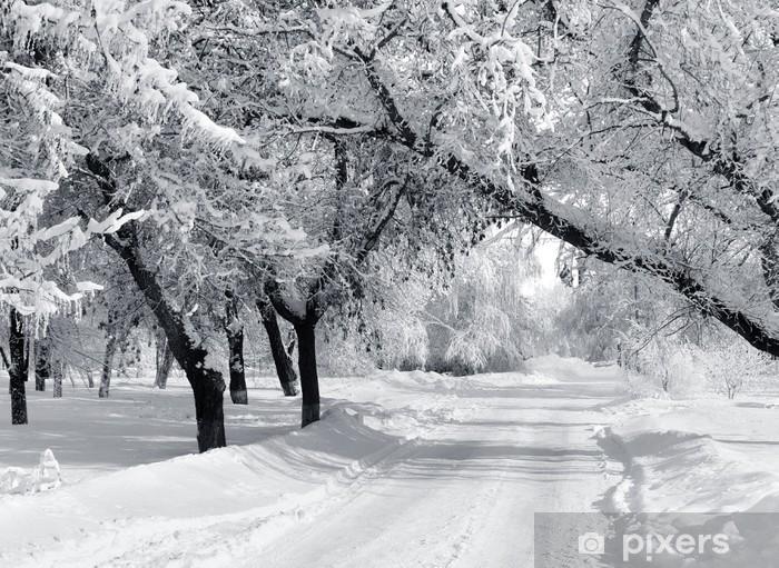 Fototapeta winylowa Winter Park, Krajobraz - Style