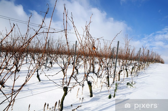 Papier peint vinyle Vignoble en hiver - Saisons