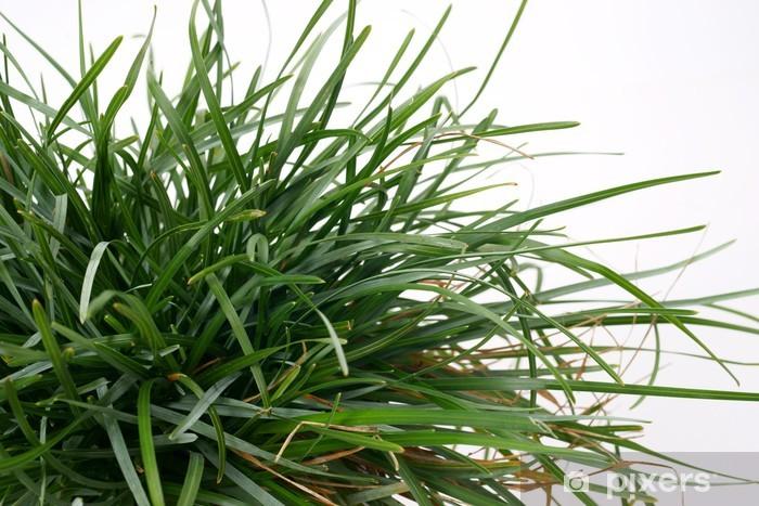 Naklejka Pixerstick Trawy ozdobne Sesleria caerulea - Dom i ogród