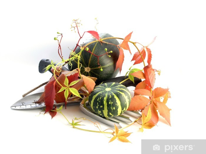 Fototapeta winylowa Dynia - Posiłki