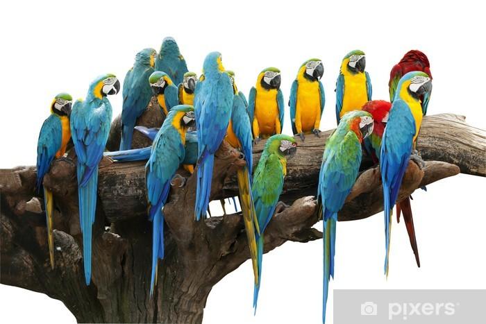 Parrots Door Sticker - Themes