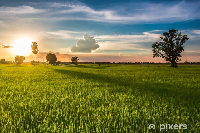 Papier peint vinyle Sunset field - Agriculture