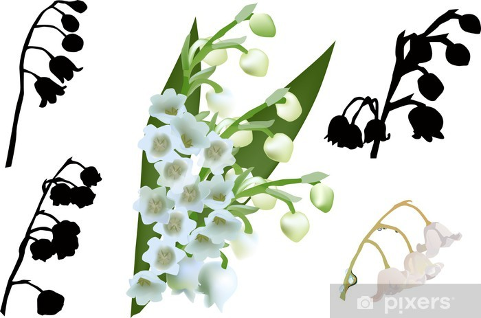 Lily Of The Valley Flowers Set Isolated