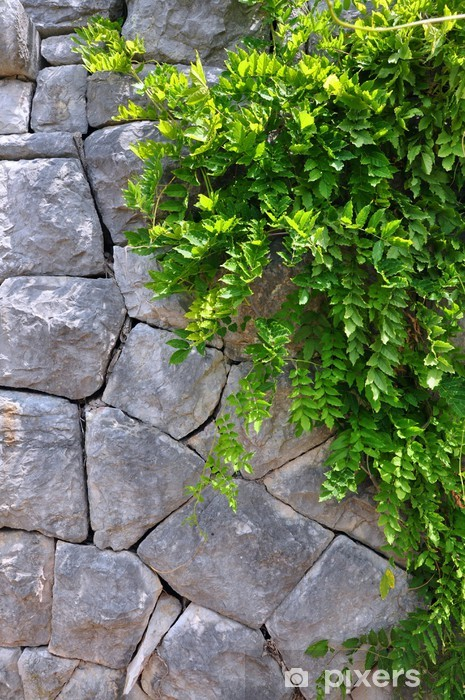 Old Stone wall and Green creeper plant - vertical picture. Vinyl Wall Mural - Plants