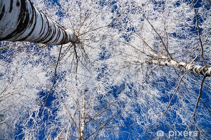 Carta da Parati in Vinile Foresta di inverno - Temi