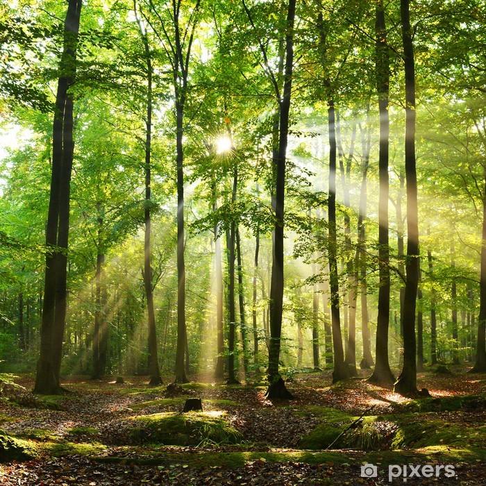 Papier peint vinyle Futaie - Forêt