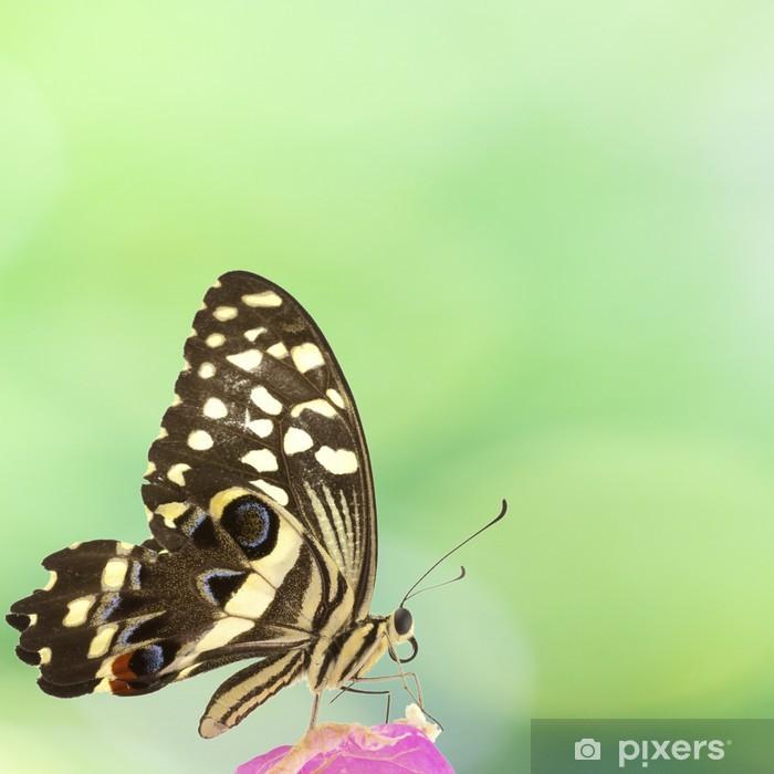 Plakat Motyl na kwiat bugenwilli - Pory roku