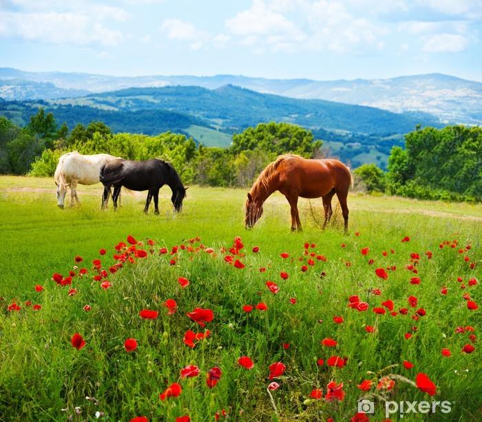 Fototapeta winylowa Tam trawa wypas koni - Tematy