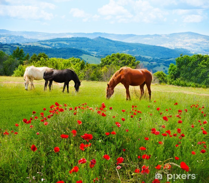 There horses grazing grass Pixerstick Sticker - Themes
