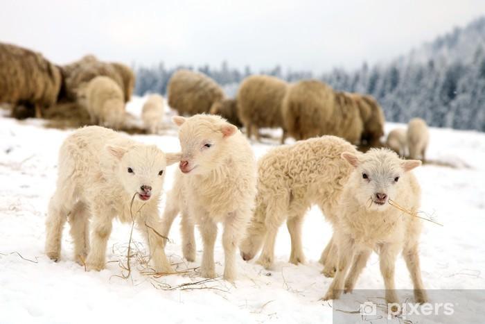 Nálepka Pixerstick Ovce skudde s jehněčím jíst seno - Témata