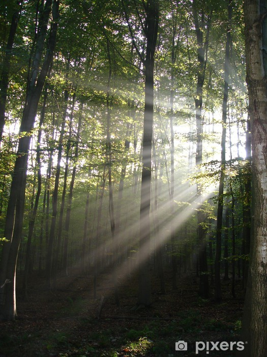 Fototapeta winylowa Światła w lesie - Abstrakcja