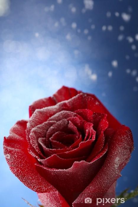 Sticker Pixerstick Rose rouge dans la neige sur fond bleu - Fleurs
