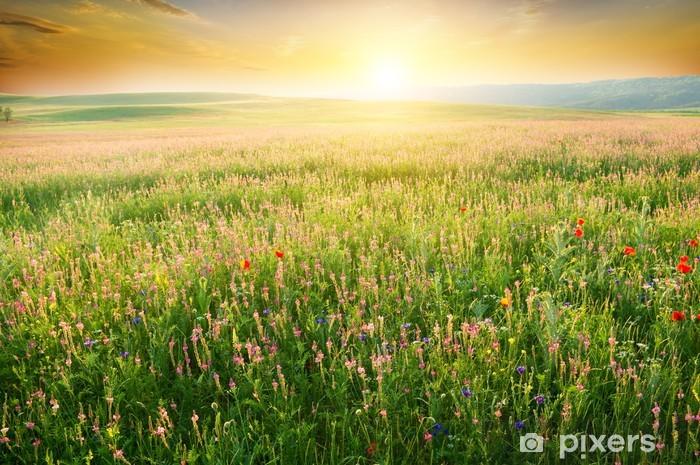 Afwasbaar Fotobehang Lente weide van paarse bloem. - Weiden, velden en gras