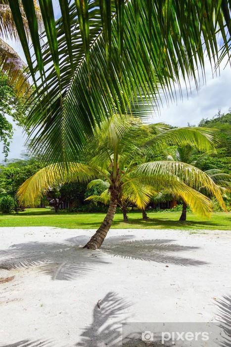 Fototapeta winylowa Palmy na tropikalnej piaszczystych Seszele - Woda