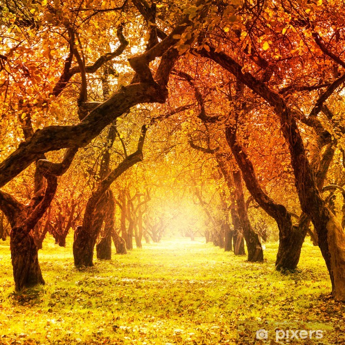 Plakat w ramie Jesień. spadek. jesienny park - Tematy