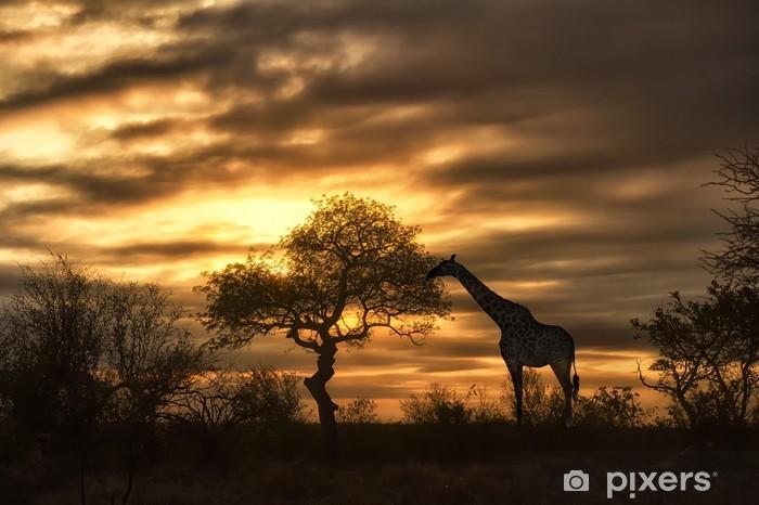 Fototapeta winylowa African żyrafa spaceru w zachodzie słońca - Tematy