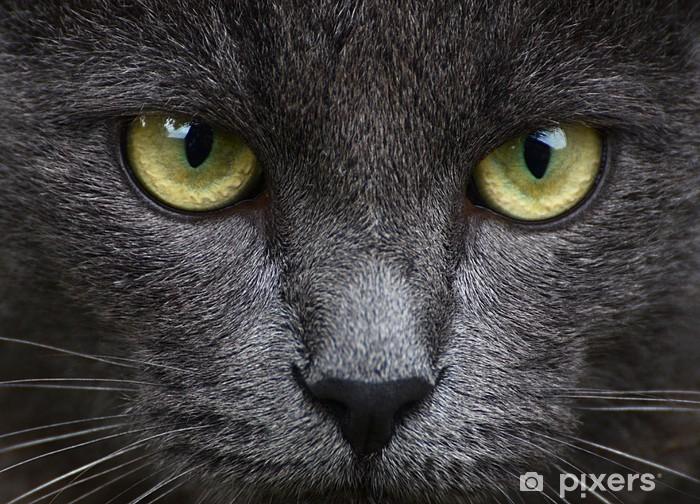 Fototapet av Vinyl Närbild porträtt av grå kattunge - Teman