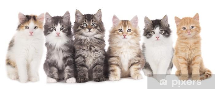 vinilos-seis-gatitos-al-lado-del-otro-grupo-gato.jpg.jpg