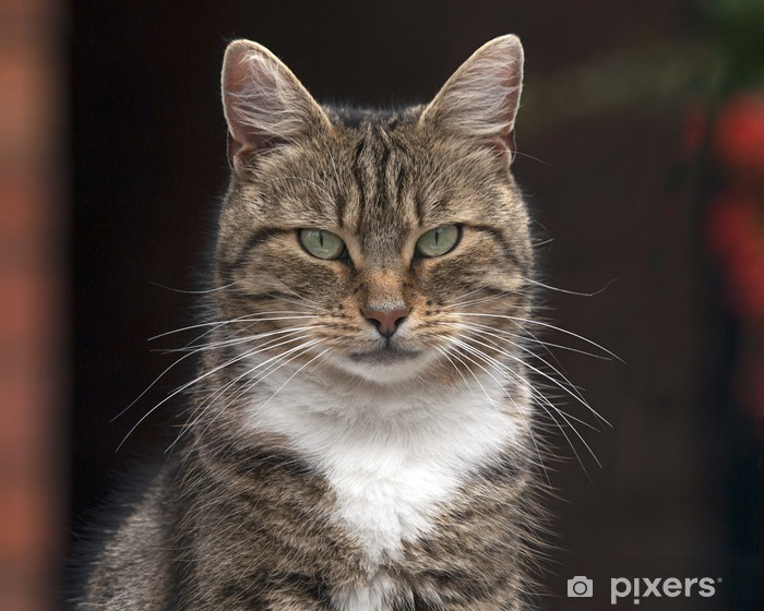 Cat Pixerstick Sticker - Mammals
