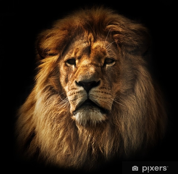 Lion portrait with rich mane on black Pixerstick Sticker -