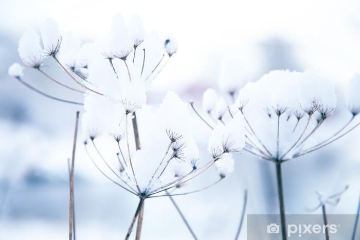 Papier peint vinyle Les plantes d'hiver congelés - Saisons