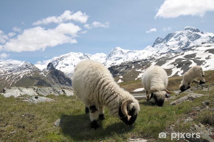Papier peint vinyle Les moutons en face de Monte Rosa dans les Alpes suisses - Europe