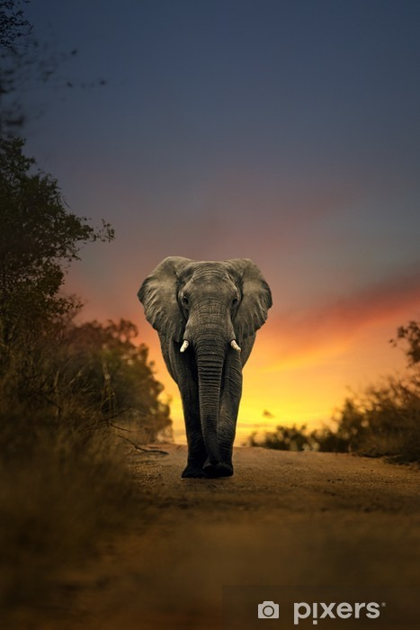 Pixerstick Sticker Afrikaanse olifant lopen in zonsondergang -