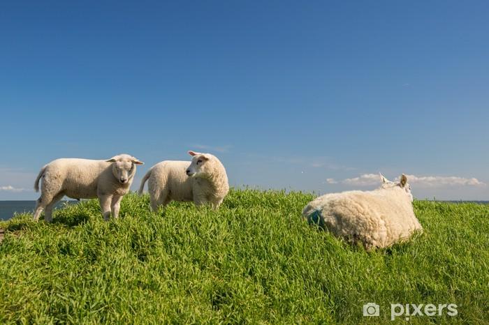 Fototapeta winylowa Owce na grobli - Ssaki