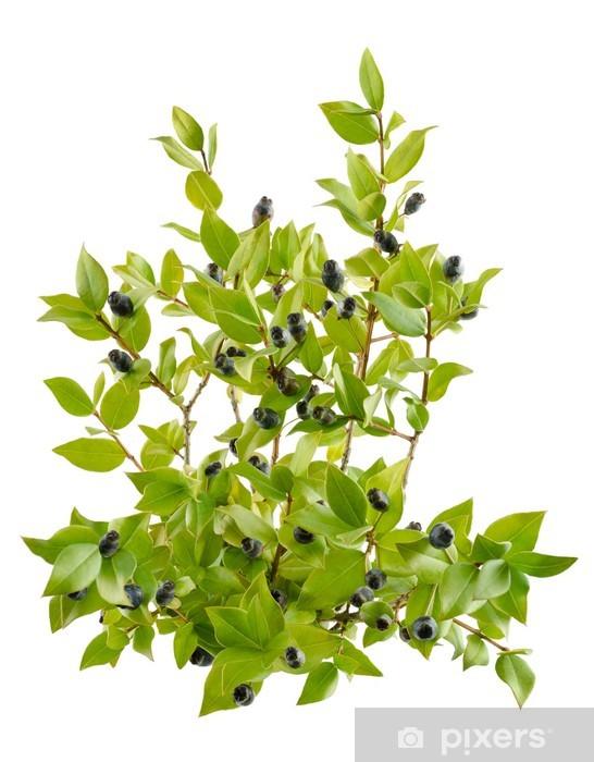 Naklejka Pixerstick Mirt - Rośliny