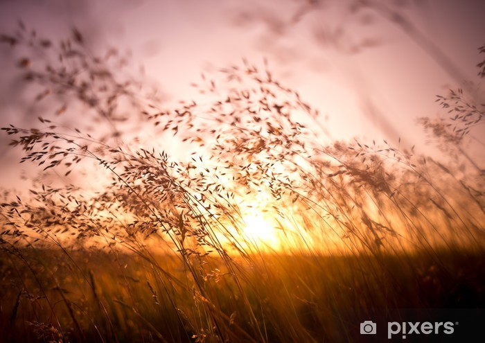 Fototapeta winylowa Suche źdźbła trawy w słońcu - Tematy