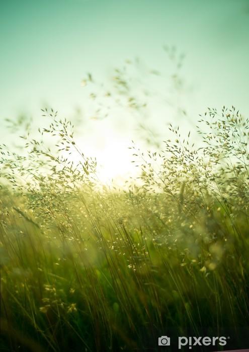 Kesällä kuivaa ruohoa Vinyyli valokuvatapetti -