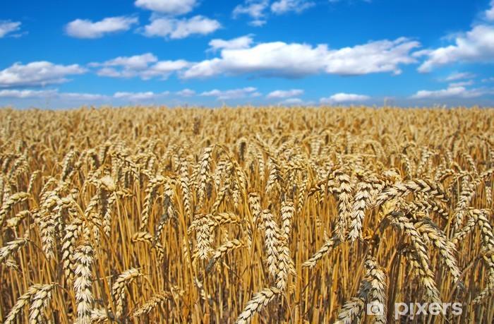 Vinyl-Fototapete Golden Weizenfeld - Landwirtschaft