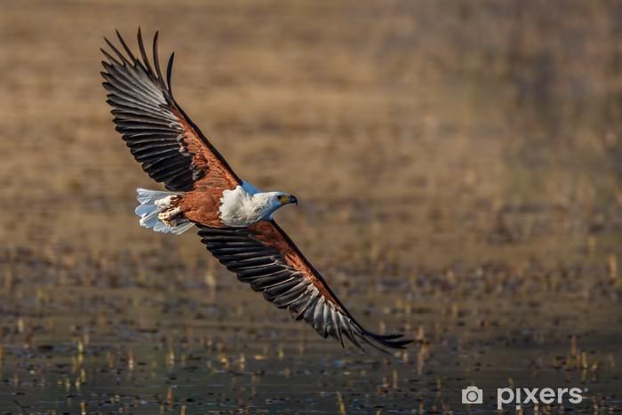 Sticker Pixerstick Fish Eagle survol - Thèmes