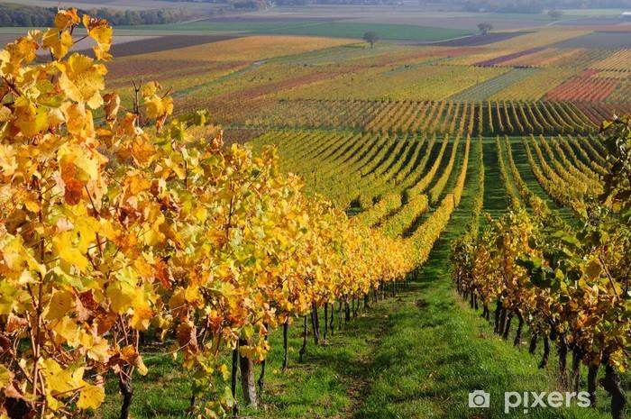 Autumn vineyard landscape in Rhine Valley, Germany Pixerstick Sticker - Germany