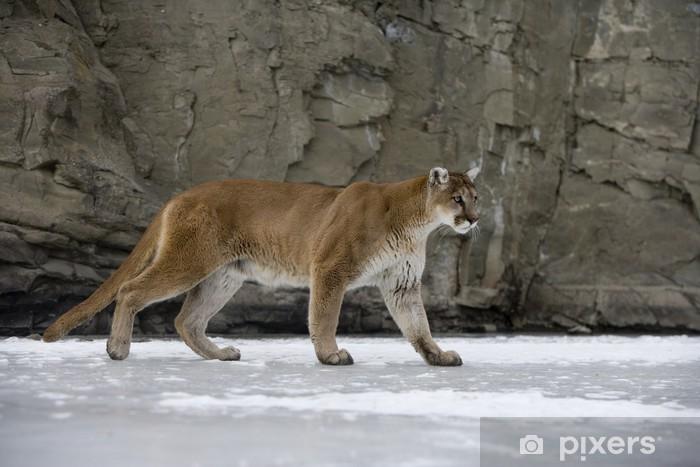 Anne, Der Blonde Puma, Geht Ab