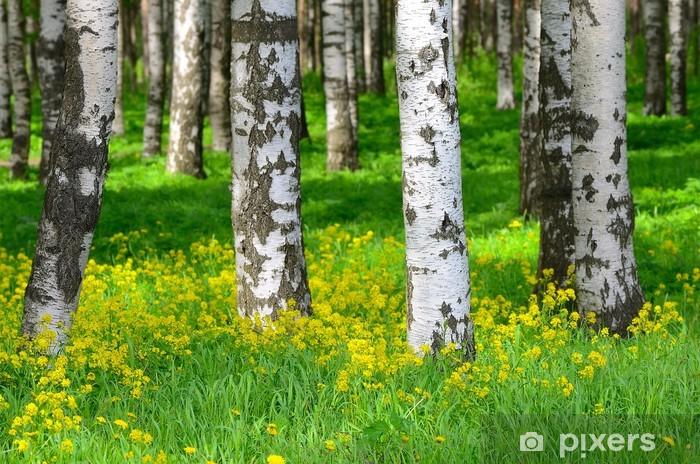 Fototapeta winylowa Drzewa w lesie brzozy - Tematy