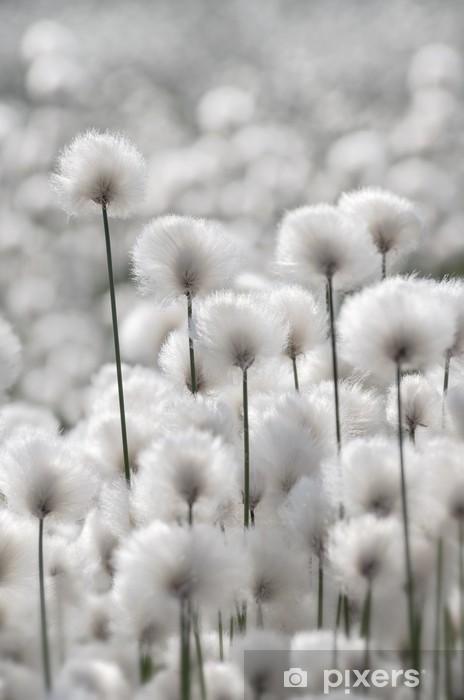 Naklejka Pixerstick Kwitnie Trawy Bawełny -