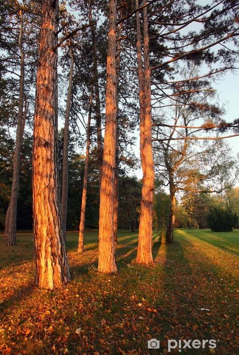 Sticker Pixerstick Lever de soleil dans une forêt de pins - Forêt