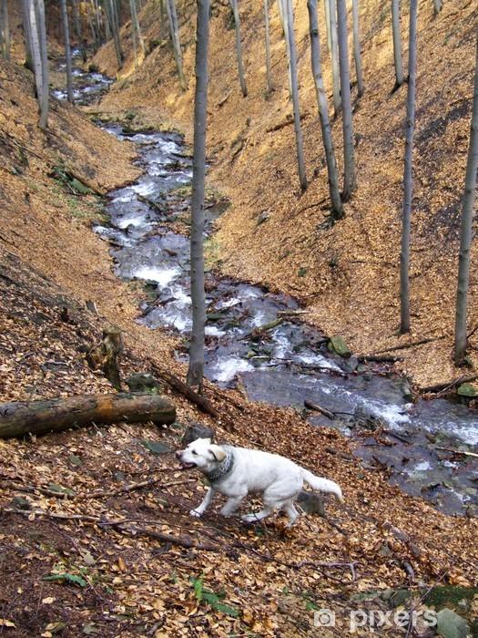 Vinyl Fotobehang Labrador - Zoogdieren
