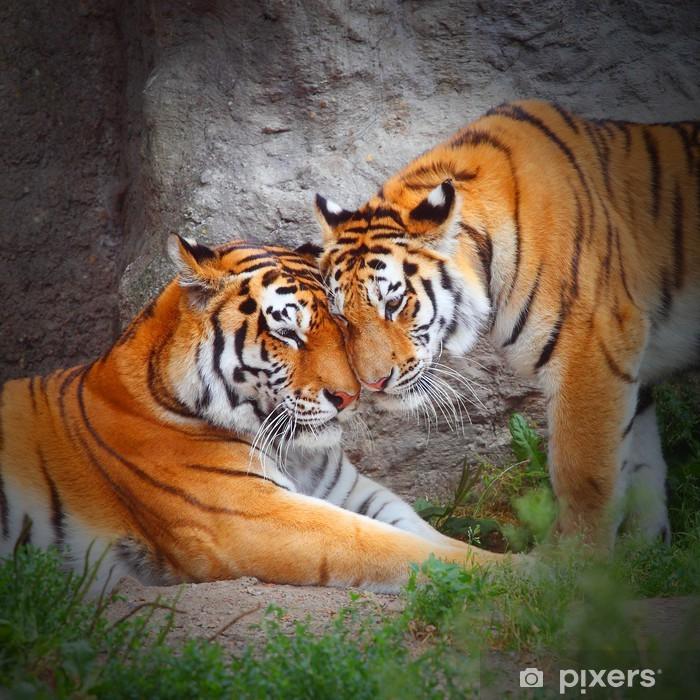 Vinilo para Nevera Pareja de Tiger. El amor en la naturaleza. -