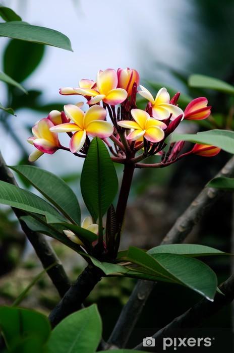 Sticker Pixerstick Frangipanier (Plumeria rubra) - Fleurs