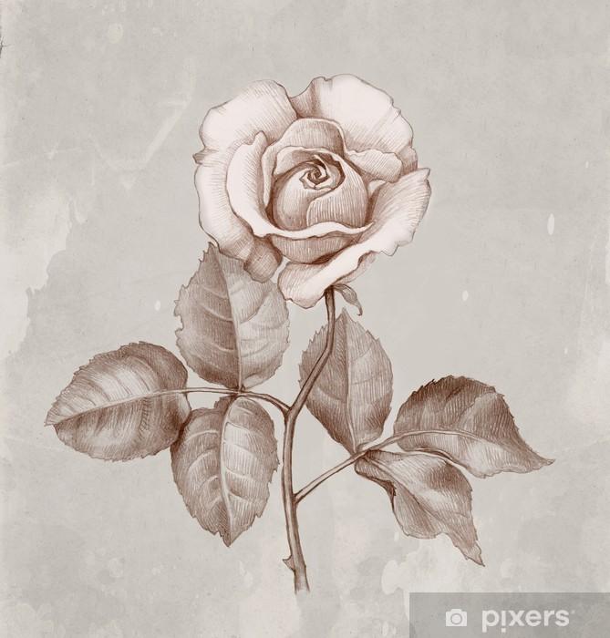 Carta Da Parati Disegno A Matita Di Rose Pixers Viviamo Per Il