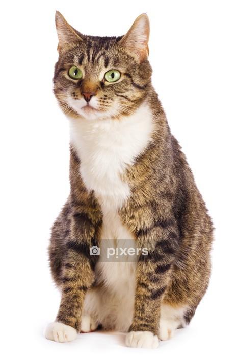 Muursticker Europese kat - Thema's