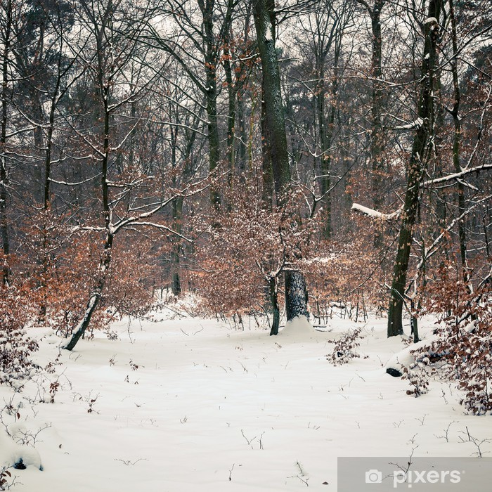 Papier peint vinyle Winter forest - Saisons