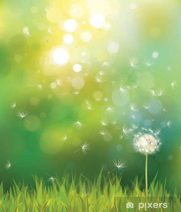 Vector of spring background with white dandelion. Pixerstick Sticker - Themes