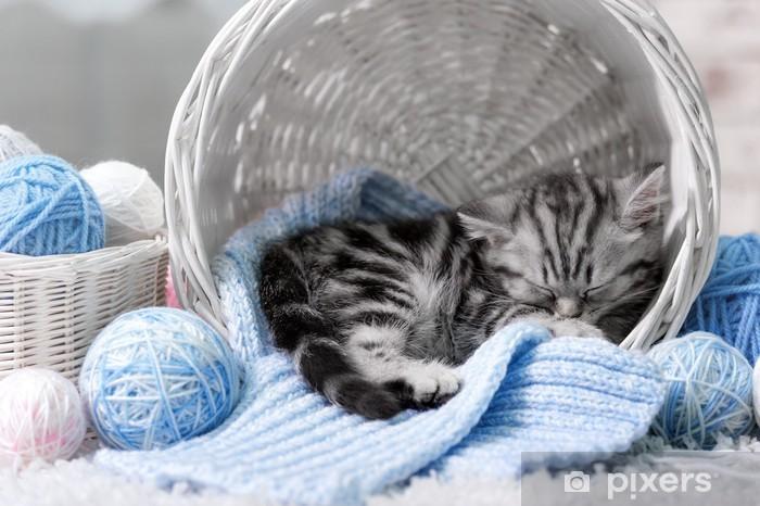 Fototapeta winylowa Kotek w koszu z kulkami z przędzy - Ssaki