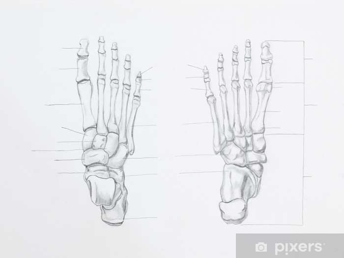 0765cbee Pixerstick-klistremerke Detalj av fotben blyant tegning på hvitt papir