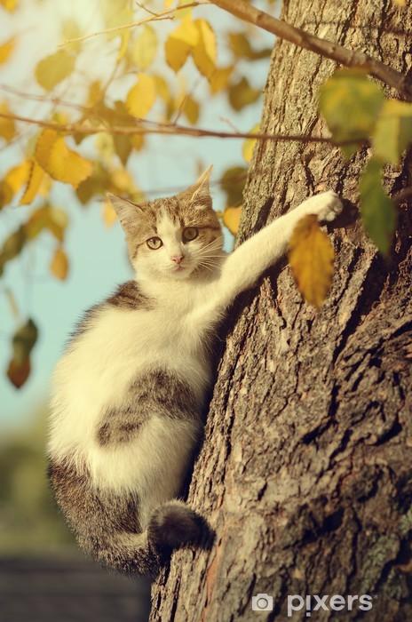 Fotomural Estándar Gatito en el árbol - Mamíferos