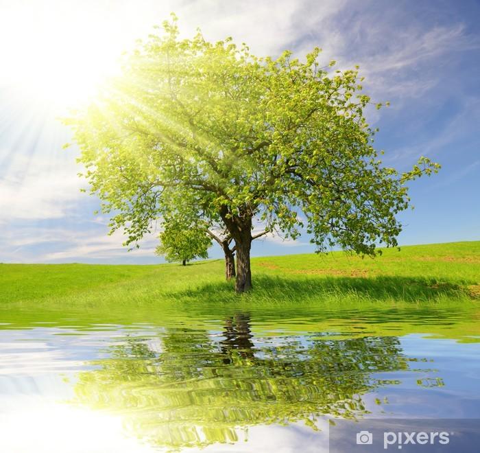 Fototapeta winylowa Wiosnę krajobraz z drzewa - Pory roku